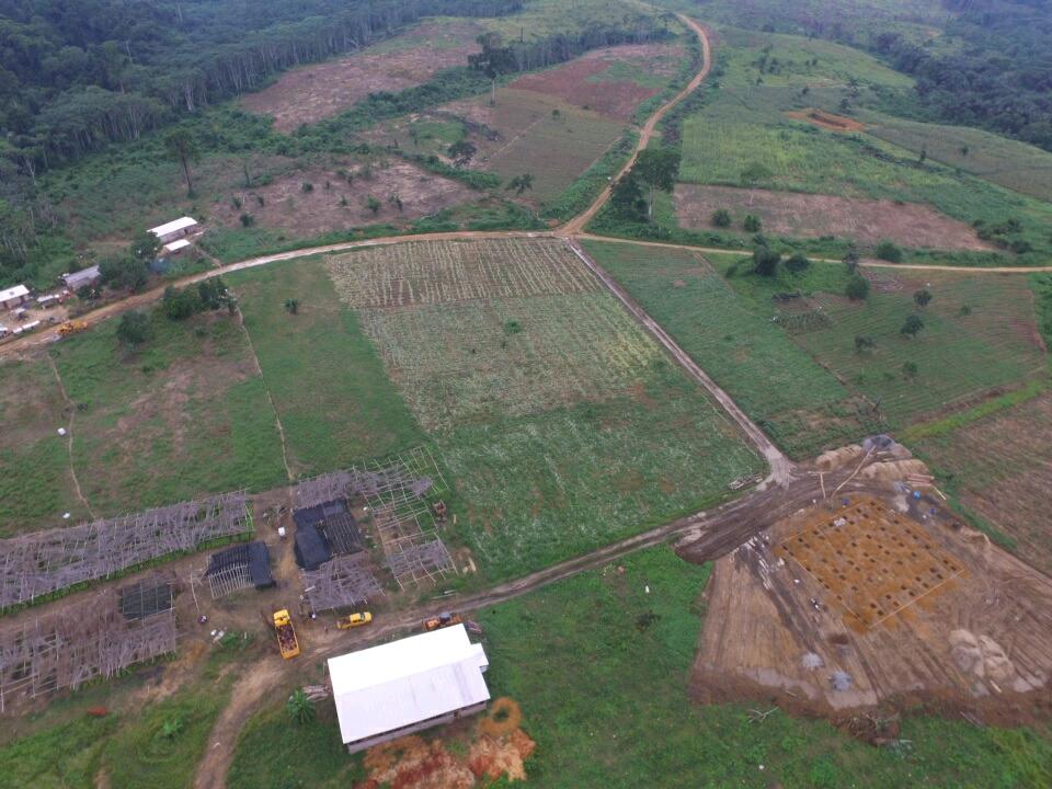 image LE CRIFAT: le premier groupe conseil agricole au Cameroun